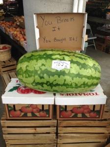 102 Pound Watermelon